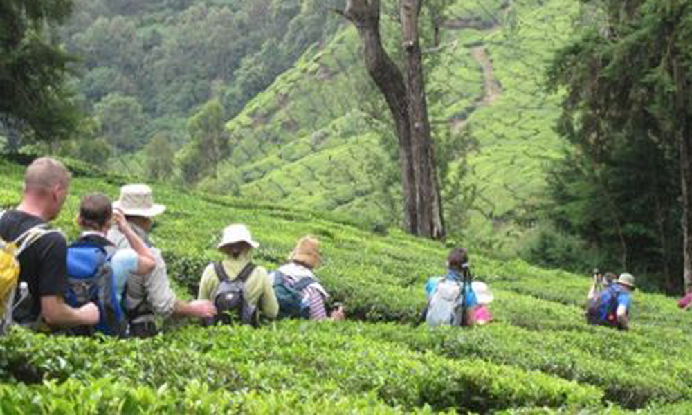 Traveling at Munnar is an outright should on your rundown of activities in Kerala! I burned through two entire days in this hilly district, investigating the celebrated Munnar tea bequest and travelin-Rengha Holidays