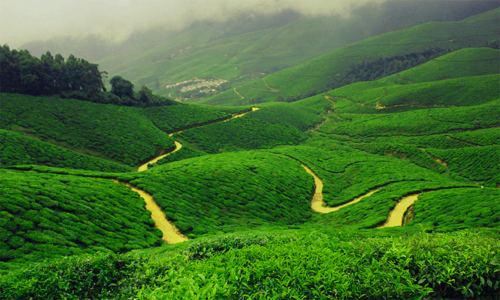 Kurangani.Theni.Tea estate The Indian tea industry has evolved to own many global tea brands, growing into one of the world's most technologically equipped tea industries.-Rengha Holidays