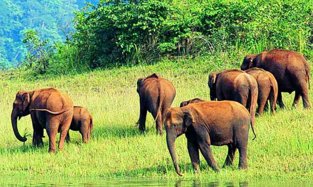 Kurangani,Thekkady .pational Park and wildlife sanctuary is located in Thekkady, Kerala. It is very famous among tourists as elephant and tiger reserve. The park covers 357 square miles of land. Two m-Rengha Holidays