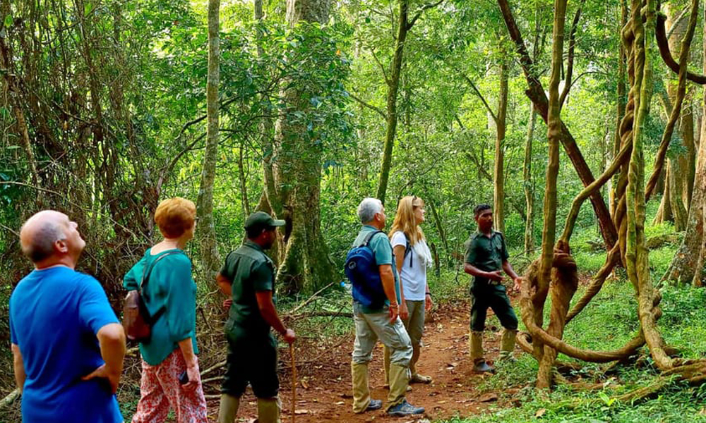 Kurangani.Thekkady,Thekkady in the Western Ghats of Kerala is one of the most gifted places in the country when it comes to Nature and Wildlife. This camping experience in y in Thekkady brings you the-Rengha Holidays