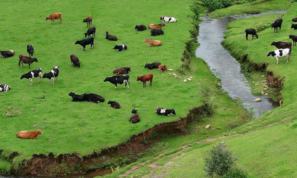 Kurangani,Munnar Indo Swiss Dairy Farm Indo Swiss Dairy Farm is a cattle development and research centre that spreads over an area of 469 acres of lush green grasslands and is home to a variety of hig-RENGHA HOLIDAYS