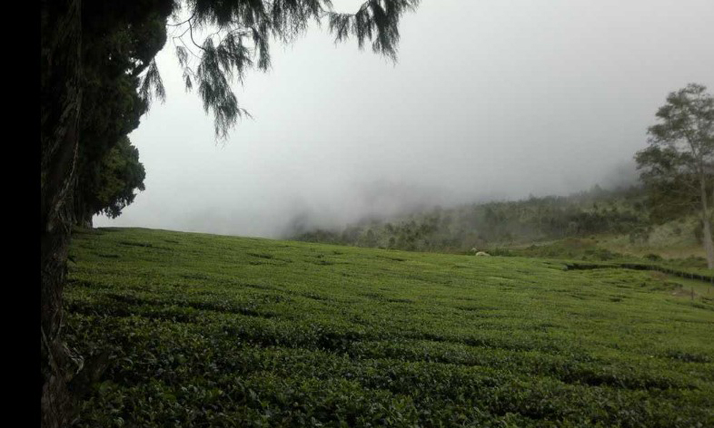 Kurangani,MUNNAR Kolukkumalai Tea Estate the Kolukkumalai Tea Estate, perched at an altitude of 7000 ft. above sea level. This orthodox tea factory lays claim to being one of the highest in the world -RENGHA HOLIDAYS